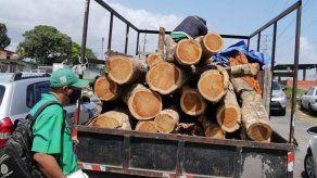 Todas las semanas se detiene a taladores de árboles furtivos