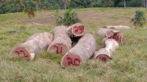 Retienen a varias personas por supuesta tala ilegal de bálsamo en Tortí
