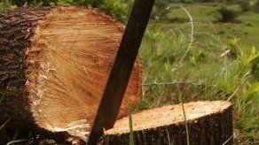 Instalan comisión que investigará la tala de árboles en selva del Darién