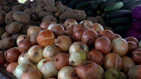 La libra de cebolla podría costar B/.0.80 la próxima semana