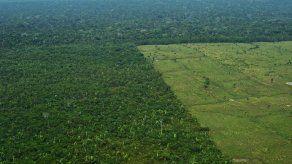 Brasil redujo en un 16 % la deforestación de la Amazonía en el último año