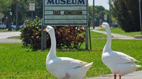 Aves beligerantes acosan a la gente en un parque de la Florida
