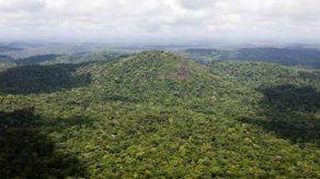 Estudiarán el papel de la jungla amazónica en ciclo global del carbono