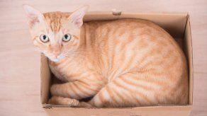 ¿Por qué le gustan las cajas a tu gato?
