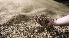 El IICA apoyará proyecto para pequeños productores e indígenas de Panamá
