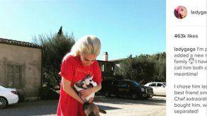 Secuestran a los perros de Lady Gaga tras disparar al encargado de pasearlos