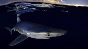 Greenpeace alerta sobre pesca de tiburón en Atlántico norte
