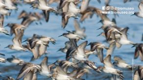 Actividades en Biomuseo por mes de las aves migratorias