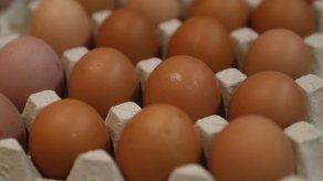 Francia prohibirá a partir de 2022 la venta de huevos criados en jaulas