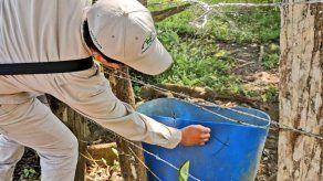 Más de mil criaderos de mosquitos fueron eliminados en Panamá Este