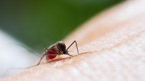 Científicos mexicanos trabajan en diseño de anticuerpos contra el chikunguña