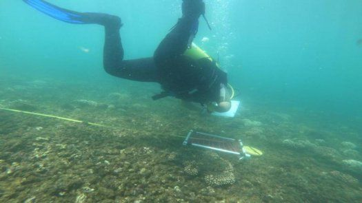 Los arrecifes de coral, explicó MiAmbiente, son los ecosistemas marinos más amenazados actualmente por diversas causas como el cambio climático que ocasiona el blanqueamiento de los corales.