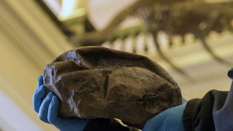 Misterioso fósil hallado en la Antártica es un gigante huevo prehistórico
