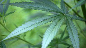 Gobierno colombiano expide normas para uso médico y científico de cannabis