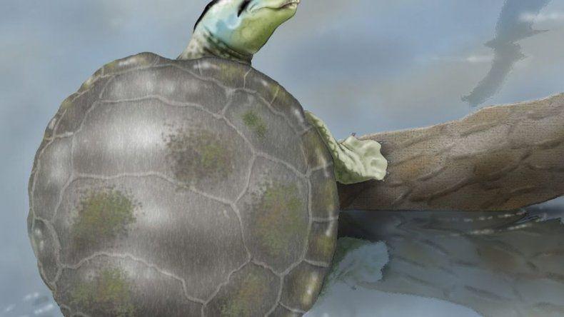 Un grupo de científicos españoles descubre en Portugal una tortuga jurásica