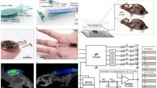 El implante diseñado, delgado, flexible e inalámbrico, permite que los ratones se comporten de forma natural en entornos realista.