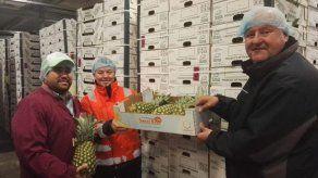 Primera exportación directa de piña panameña llega a puerto de Rotterdam