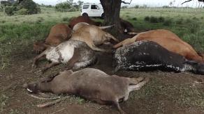 Catorce reses muertas tras caída de un rayo en Veraguas