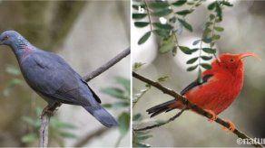 Expertos descubren los factores que explican la diversidad de aves insulares