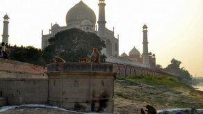 Un mono mata a un bebé en India tras arrebatárselo a su madre