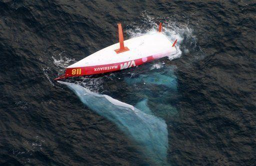 Tripulante francés desaparece en el Cabo de Hornos